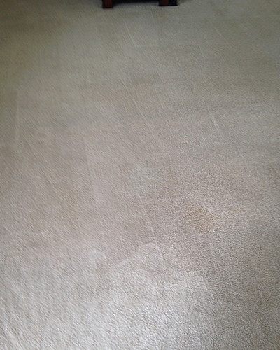 Bravo Carpet Cleaning and Care